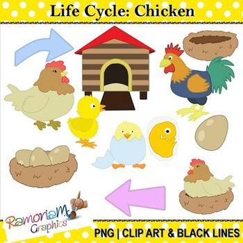 Chicken life cycle clipart. Clip art pinterest children