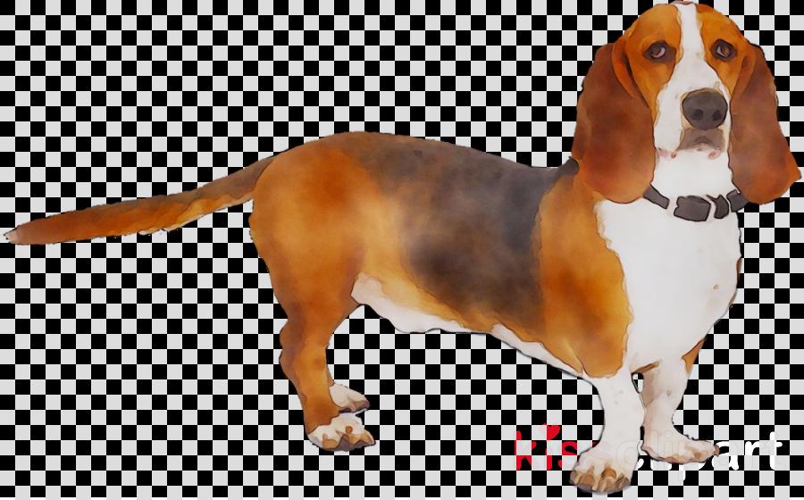 Chien clipart clip freeuse basset chien clipart Basset Hound Drever Beagletransparent png image ... clip freeuse