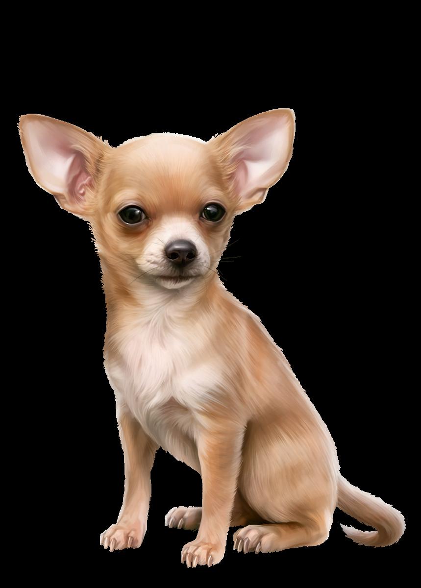Wild dog clipart jpg royalty free stock Oscar.png | Dog 3D Tubes 1 | Pinterest jpg royalty free stock