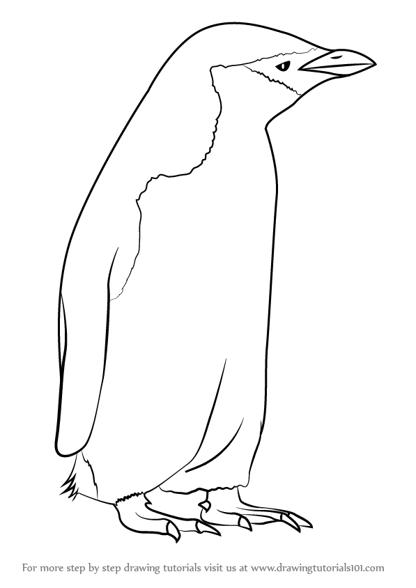 Chin strap clipart image transparent library Learn How to Draw a Chinstrap Penguin (Antarctic Animals) Step by ... image transparent library