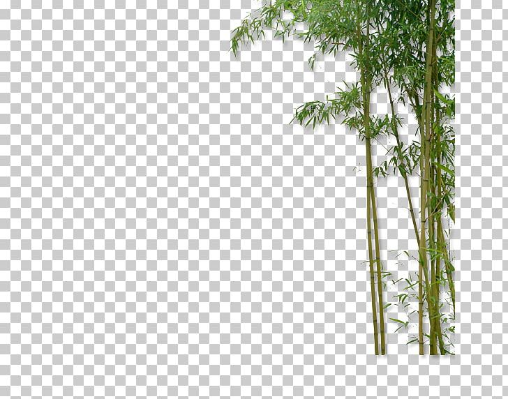 Chinese bamboo tree clipart banner black and white stock China Bamboo Plant PNG, Clipart, Angle, Bamboo, Bamboo Border ... banner black and white stock
