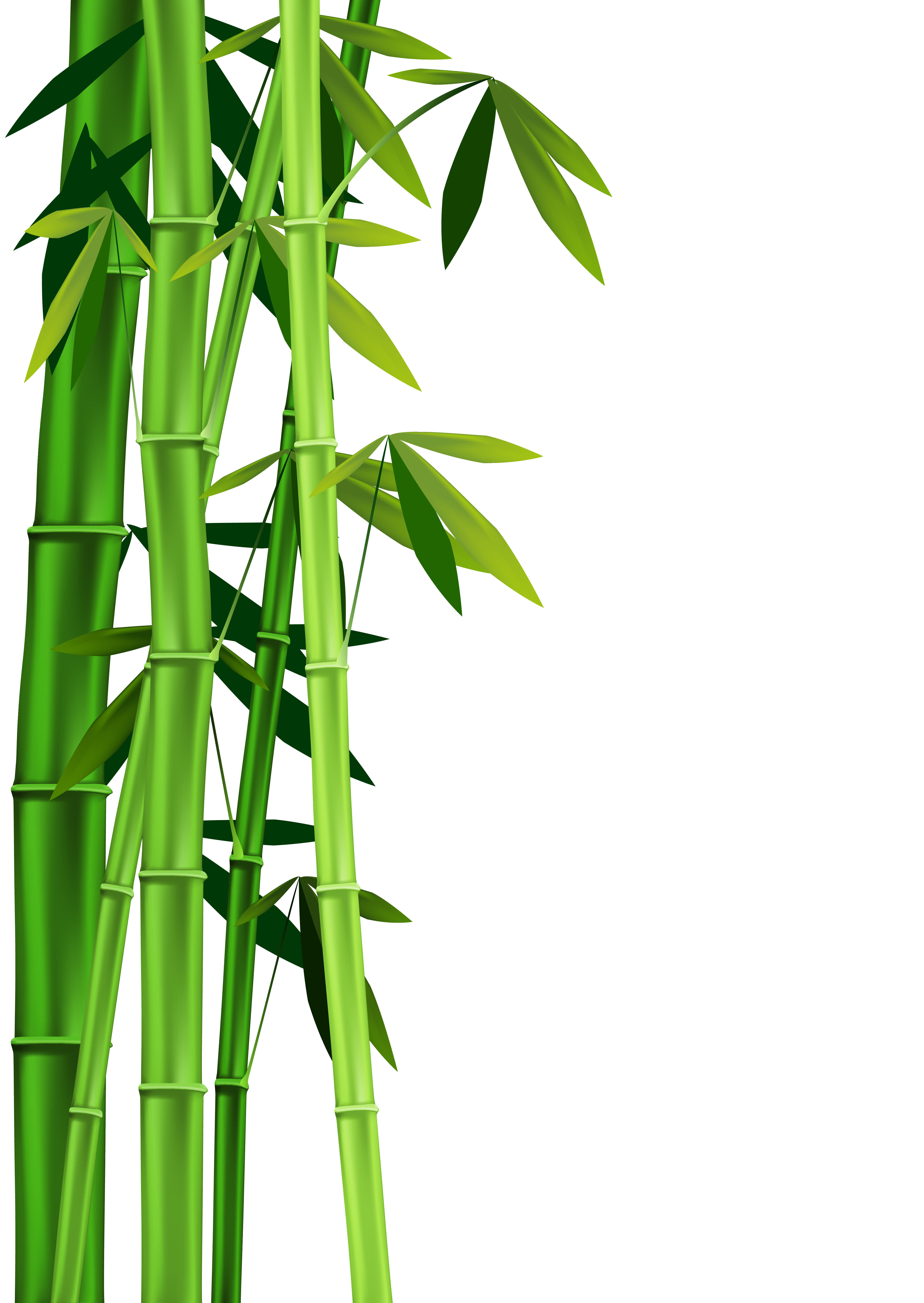 Chinese bamboo tree clipart image royalty free download Bamboo Tree Drawing | Free download best Bamboo Tree Drawing on ... image royalty free download