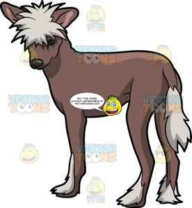 Chinese crested clipart images banner free download A Fierce Chinese Crested Dog banner free download