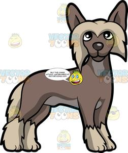 Chinese crested clipart images picture free An Alerted Chinese Crested Dog picture free