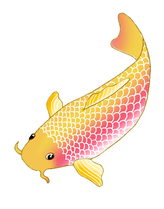 Elegant fish clipart. Colorful koi drawings sketch