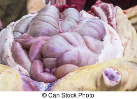Chitterlings clipart picture royalty free library Chitterlings Stock Photo Images. 244 Chitterlings royalty free ... picture royalty free library