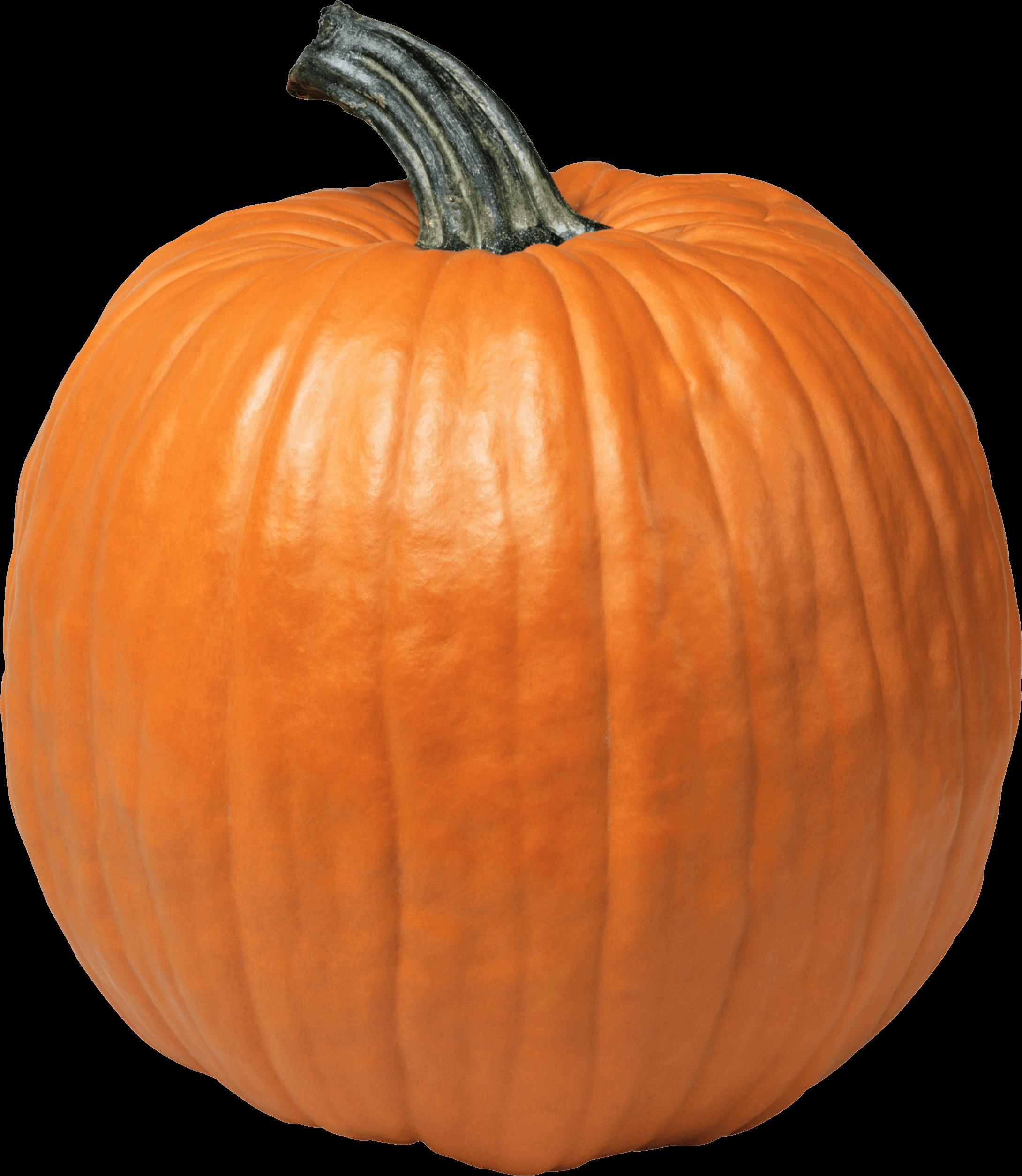 Single pumpkin clipart picture freeuse download Pumpkins transparent PNG images - StickPNG picture freeuse download