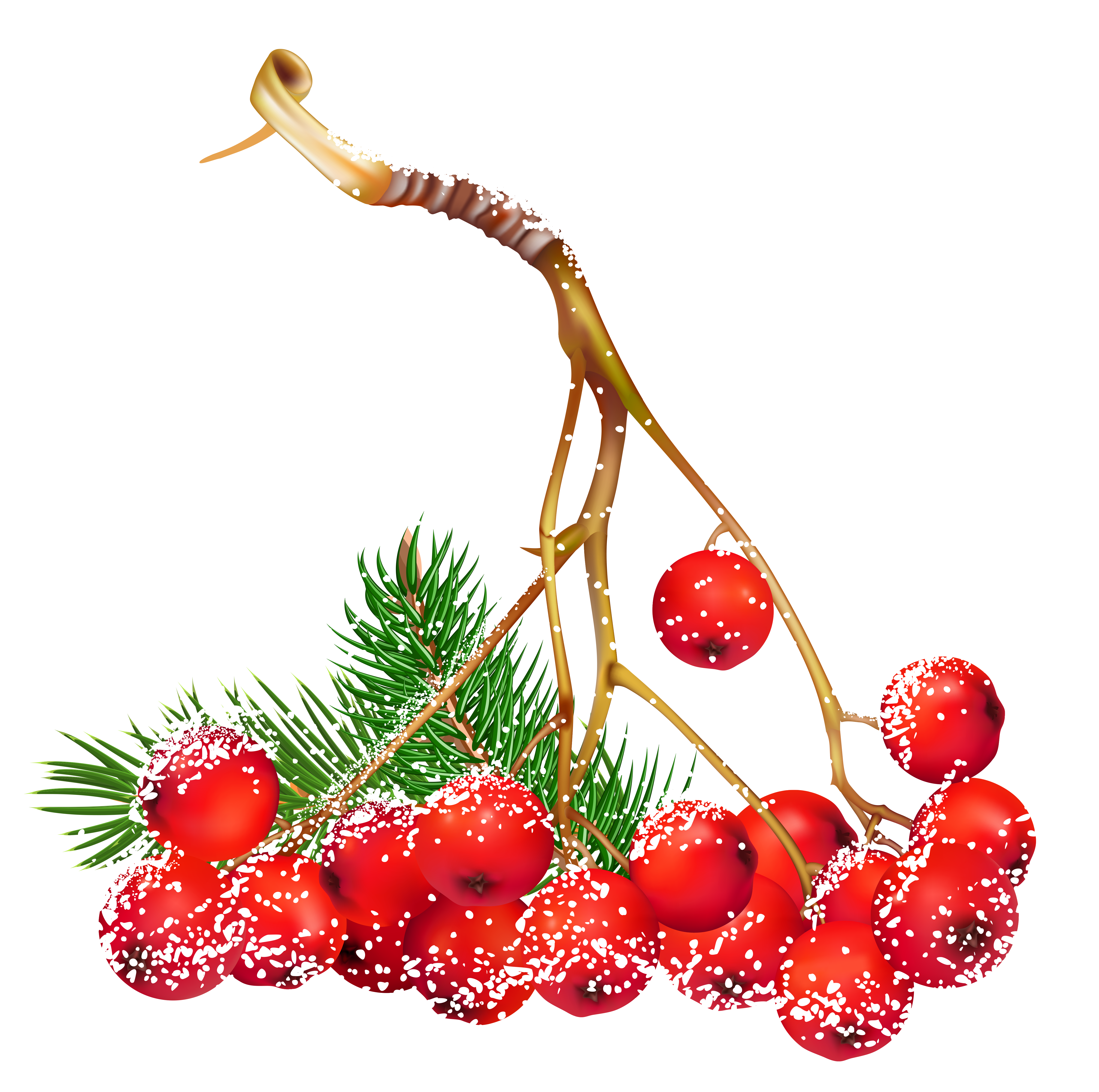 Christmas berries clipart png freeuse Transparent Christmas Snowy Holly Berries PNG Clipart | Gallery ... png freeuse