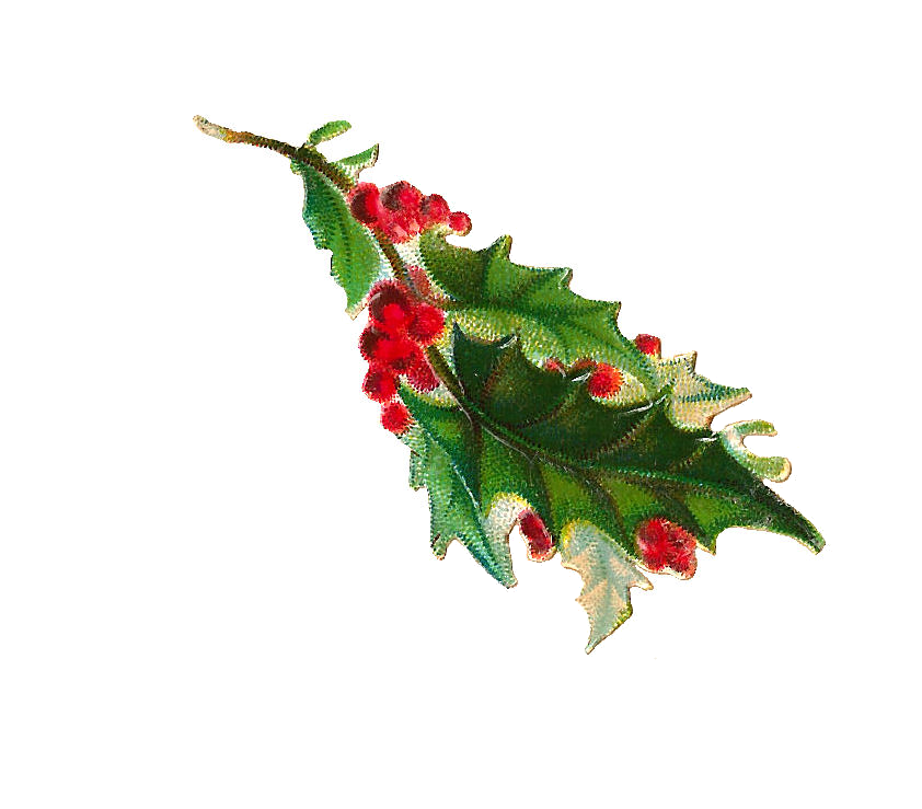 Christmas berries clipart picture transparent library Antique Images: Free Christmas Clip Art: Digital Scrap of Holly and ... picture transparent library