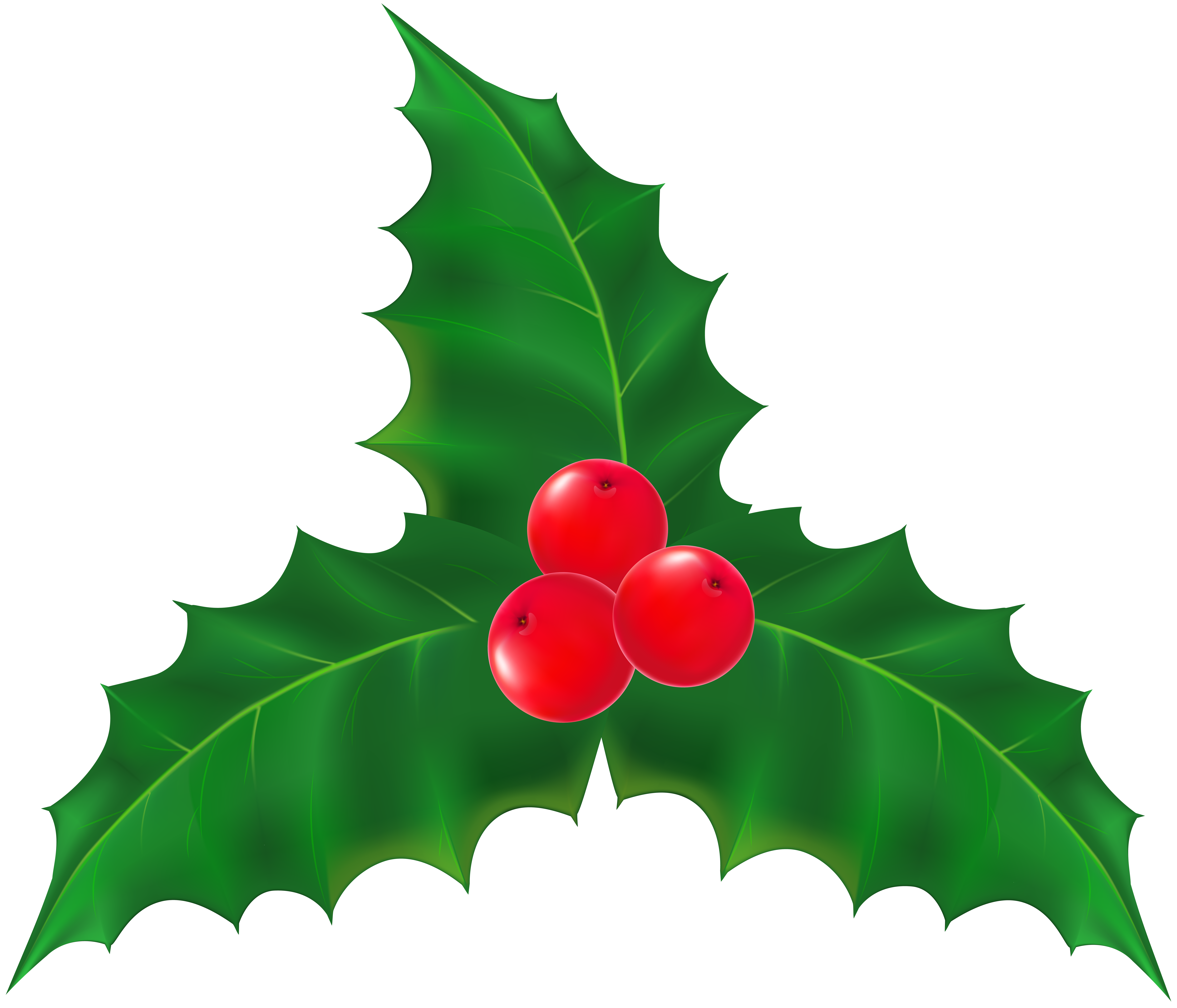 Holly tree clipart picture freeuse download Holly Leaf Clipart at GetDrawings.com | Free for personal use Holly ... picture freeuse download