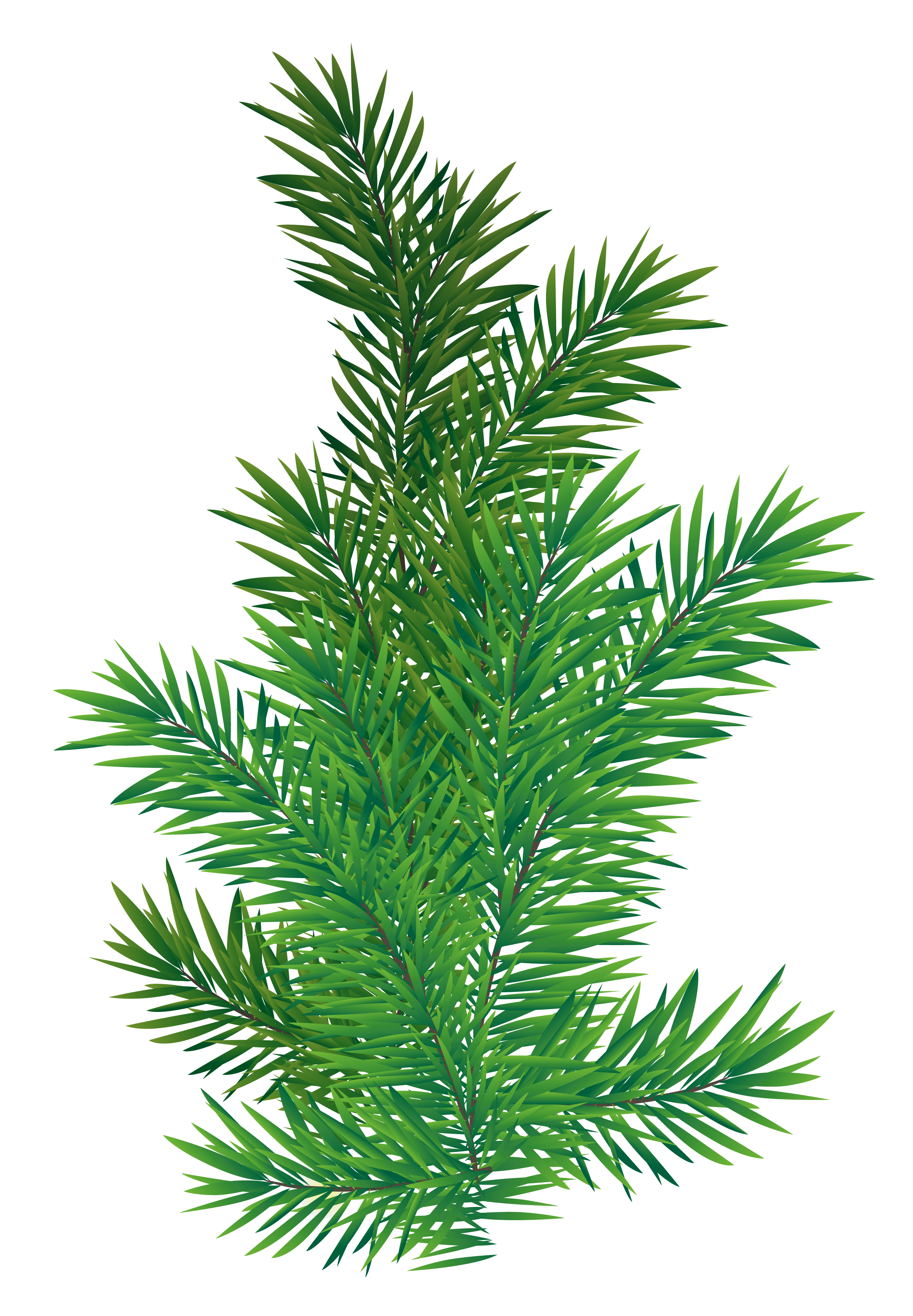 Christmas bough clipart banner free download Pine Branch PNG Picture   Gallery Yopriceville - High-Quality ... banner free download