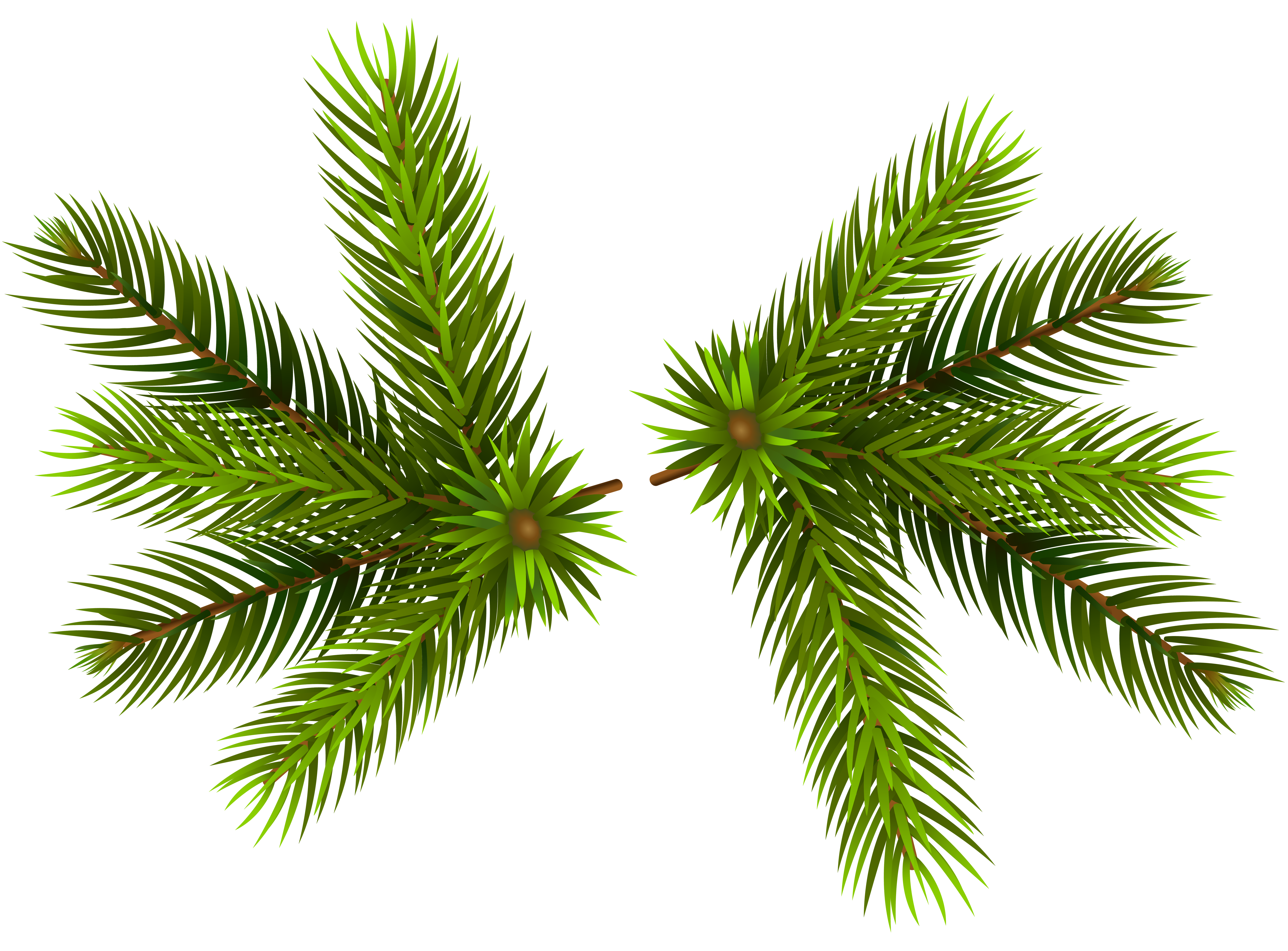 Christmas branches clipart png freeuse stock Pine Branches Transparent PNG Clip-Art Image | Gallery Yopriceville ... png freeuse stock