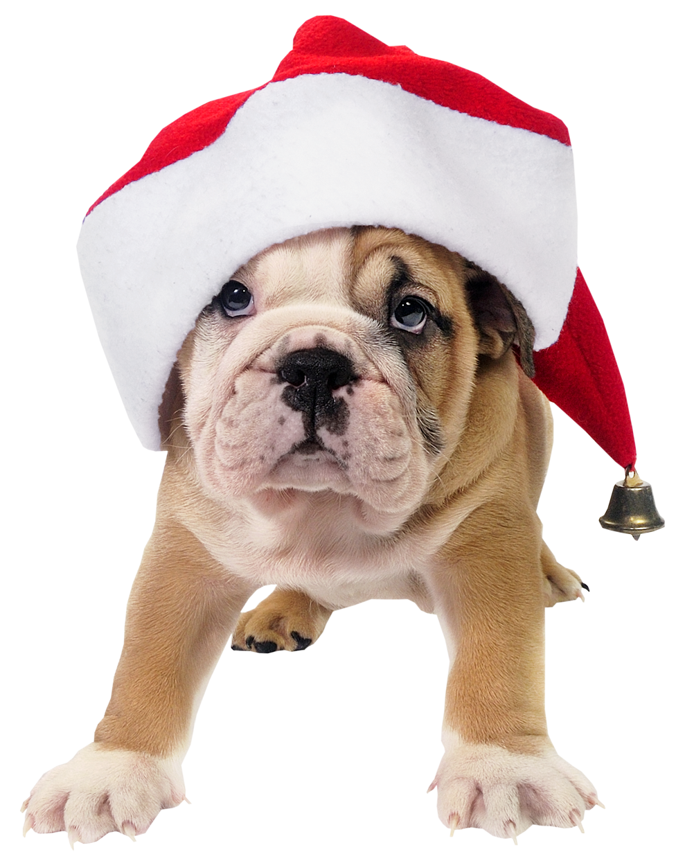 Santa dog clipart banner transparent download Cute Dog with Santa Hat Transparent PNG Picture | Gallery ... banner transparent download
