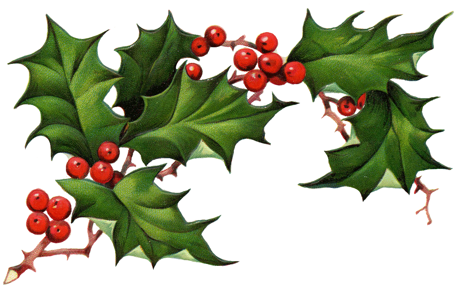 Christmas clipart holly picture library download 28+ Collection of Christmas Holly Clipart Free | High quality, free ... picture library download