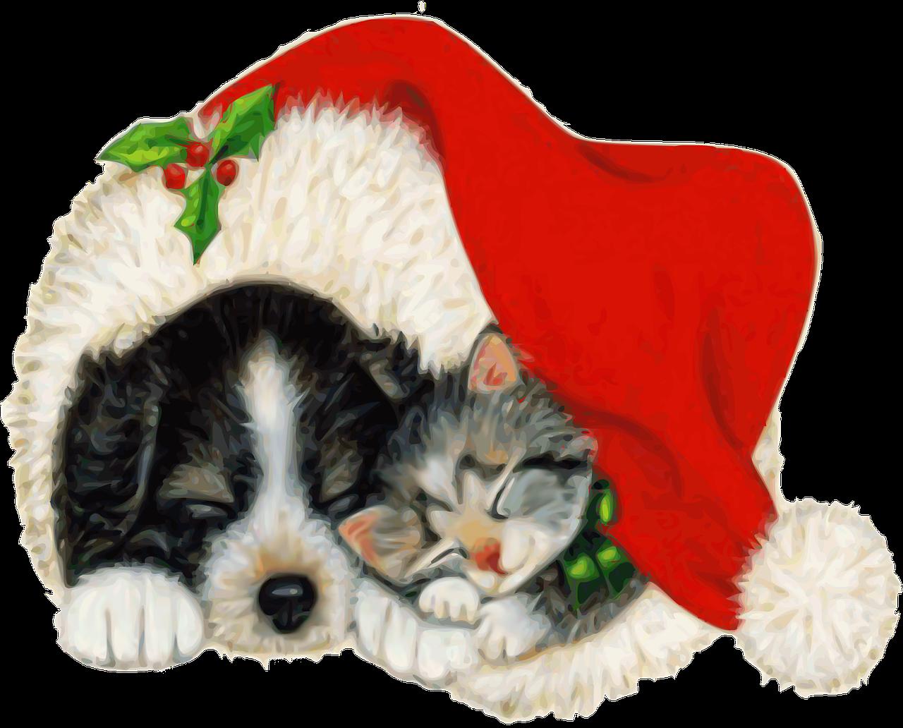 Christmas dog and cat clipart jpg free Free Image on Pixabay - Dog, Cat, Pet, Animal, Christmas   Dog cat ... jpg free