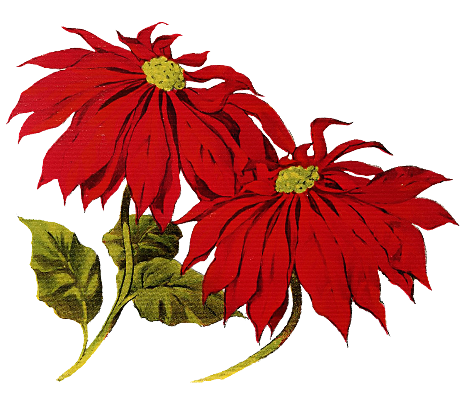 Free pictures of christmas flowers transparent library Christmas flowers free clipart - ClipartFest transparent library