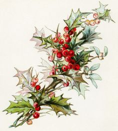 Christmas flowers free clipart picture download vintage christmas flower, holly and berries image, vintage floral ... picture download