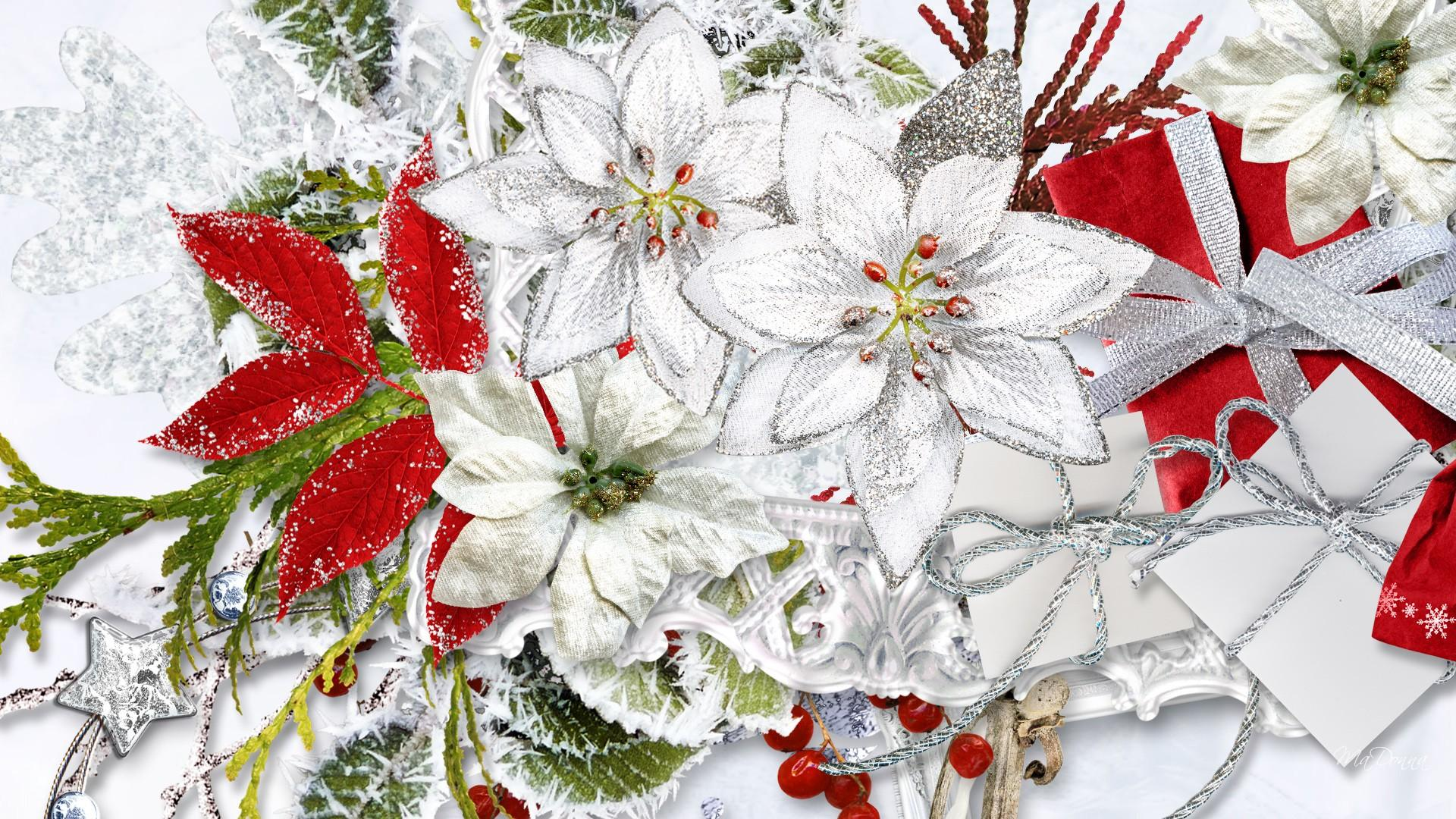 Christmas flowers pictures free vector stock White Christmas Flowers Wallpaper Free HD   I HD Images vector stock