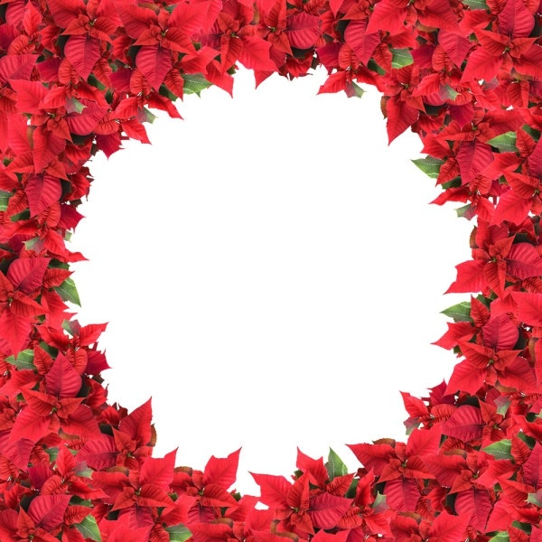 Christmas flowers pictures free graphic transparent download Christmas flowers free stock photos download (12,982 Free stock ... graphic transparent download