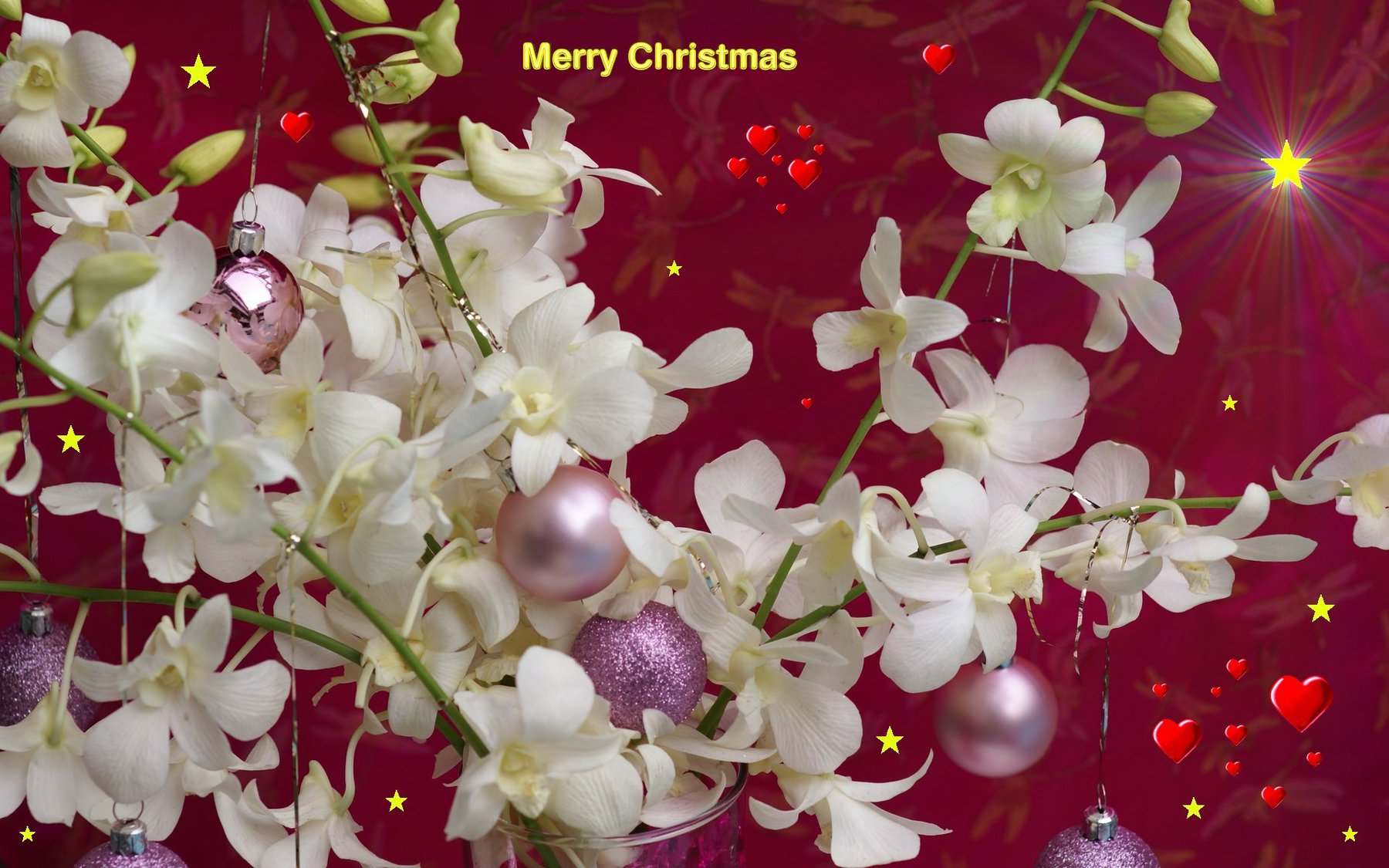 Christmas flowers pictures free image freeuse library Free Christmas Flower wallpaper Wallpapers - HD Wallpapers 88196 image freeuse library