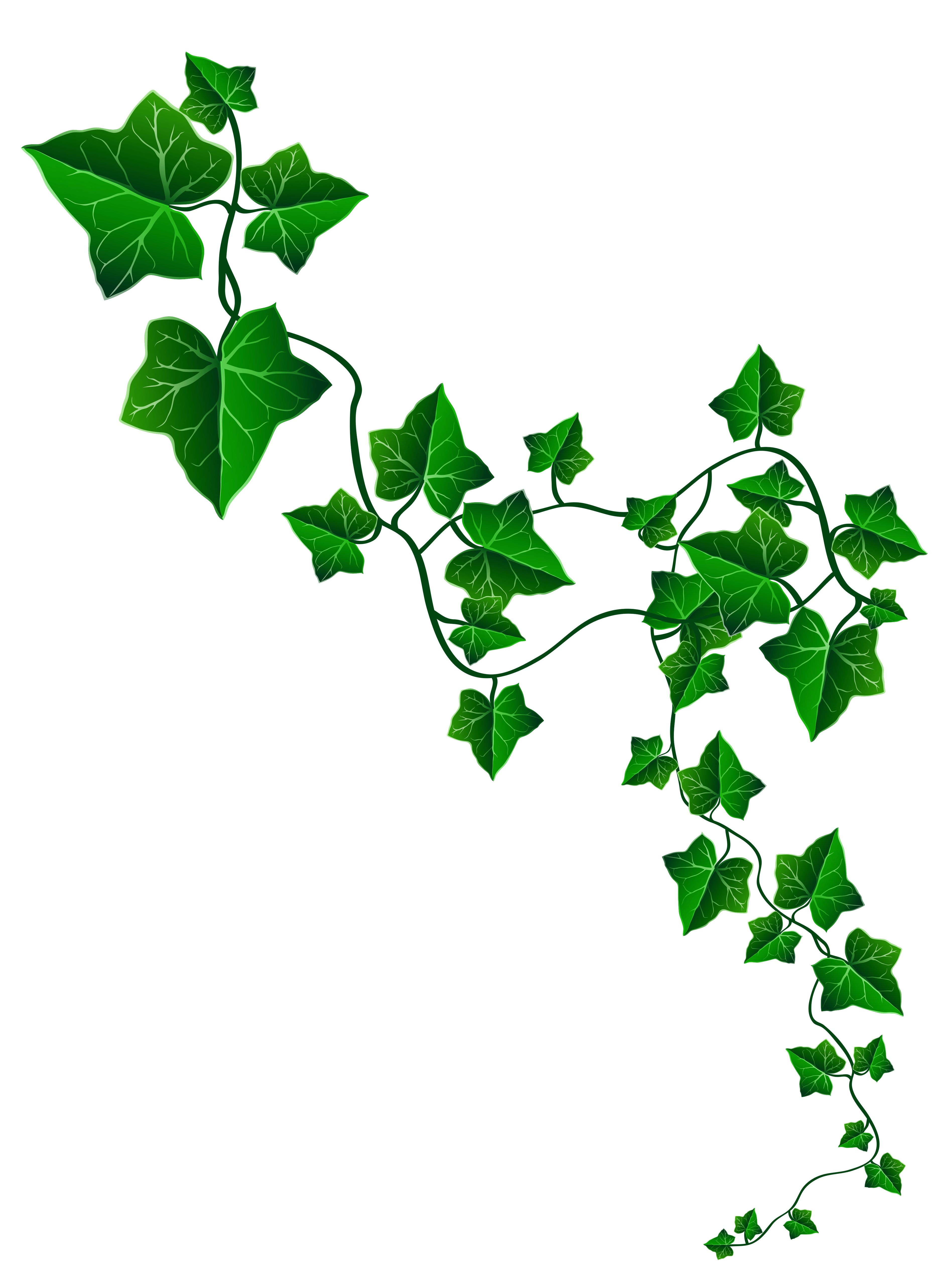 Tree vine clipart black and white Vine Ivy Decoration PNG Clipart Image | Gallery Yopriceville - High ... black and white