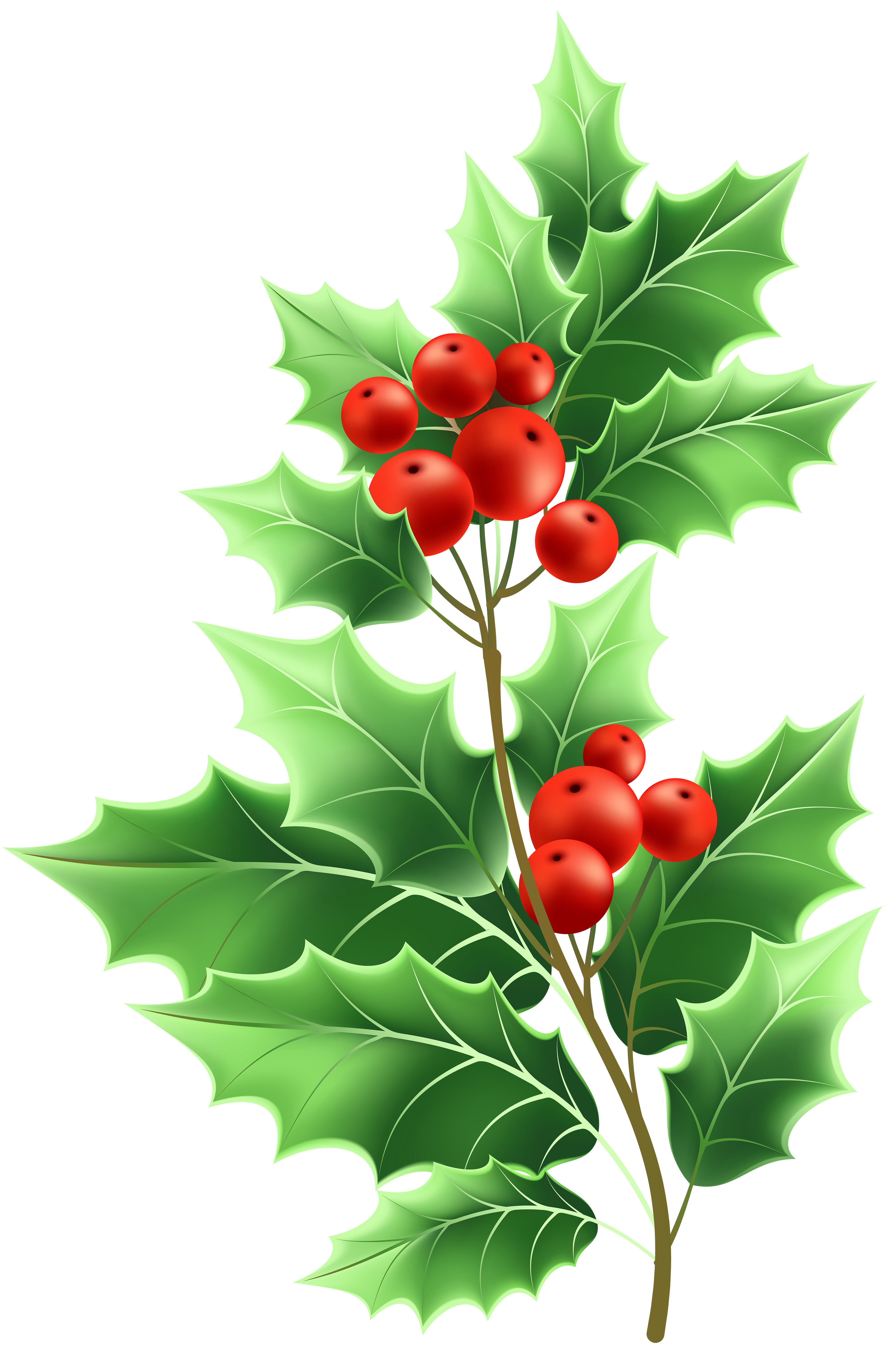 Christmas mistletoe clipart clipart freeuse Image file formats Lossless compression - Christmas Mistletoe ... clipart freeuse