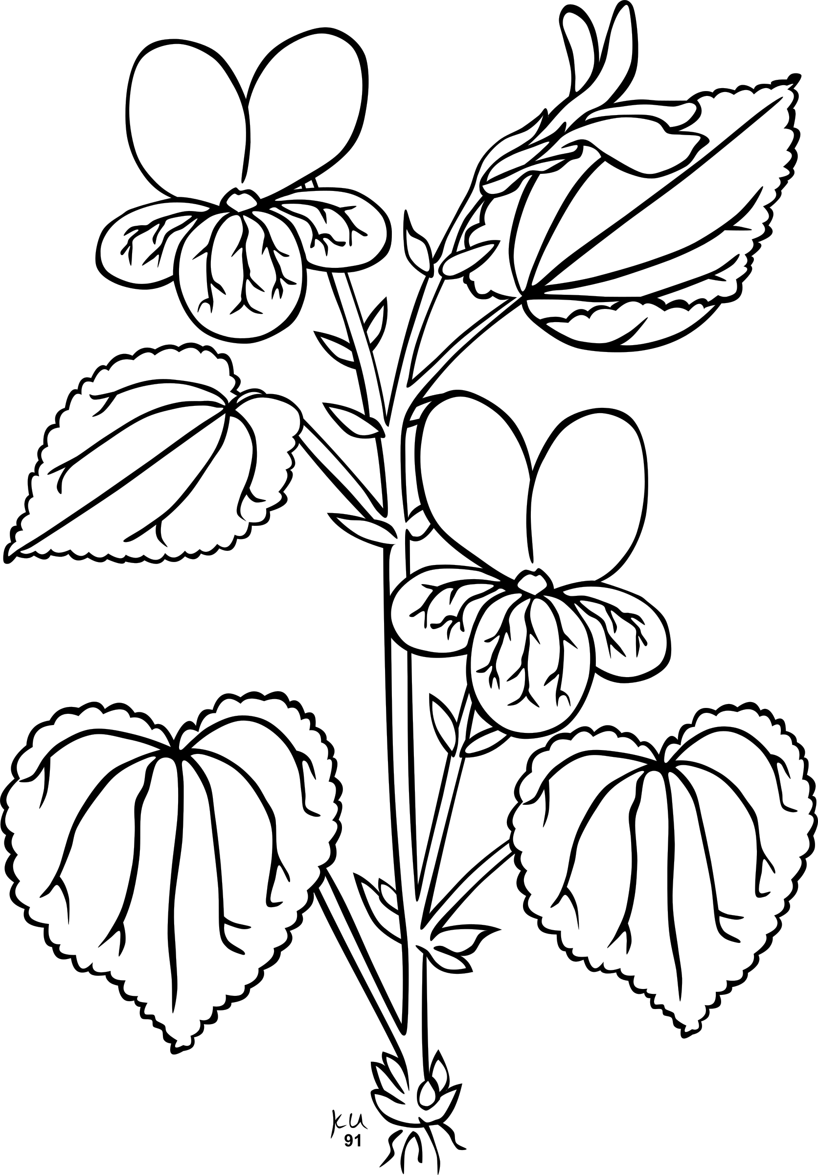 Christmas money tree clipart black and white svg royalty free Sampaguita Drawing at GetDrawings.com | Free for personal use ... svg royalty free