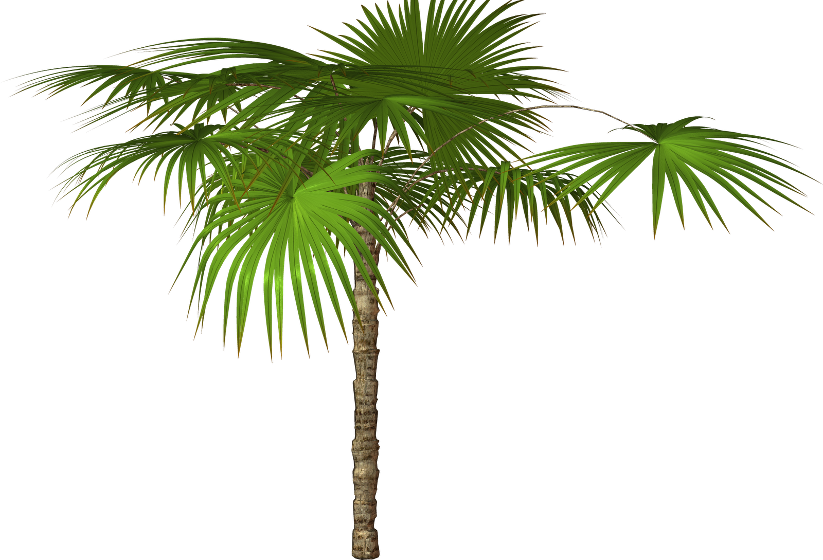 Palm tree clipart free picture royalty free library Palm Tree Transparent PNG Pictures - Free Icons and PNG Backgrounds picture royalty free library