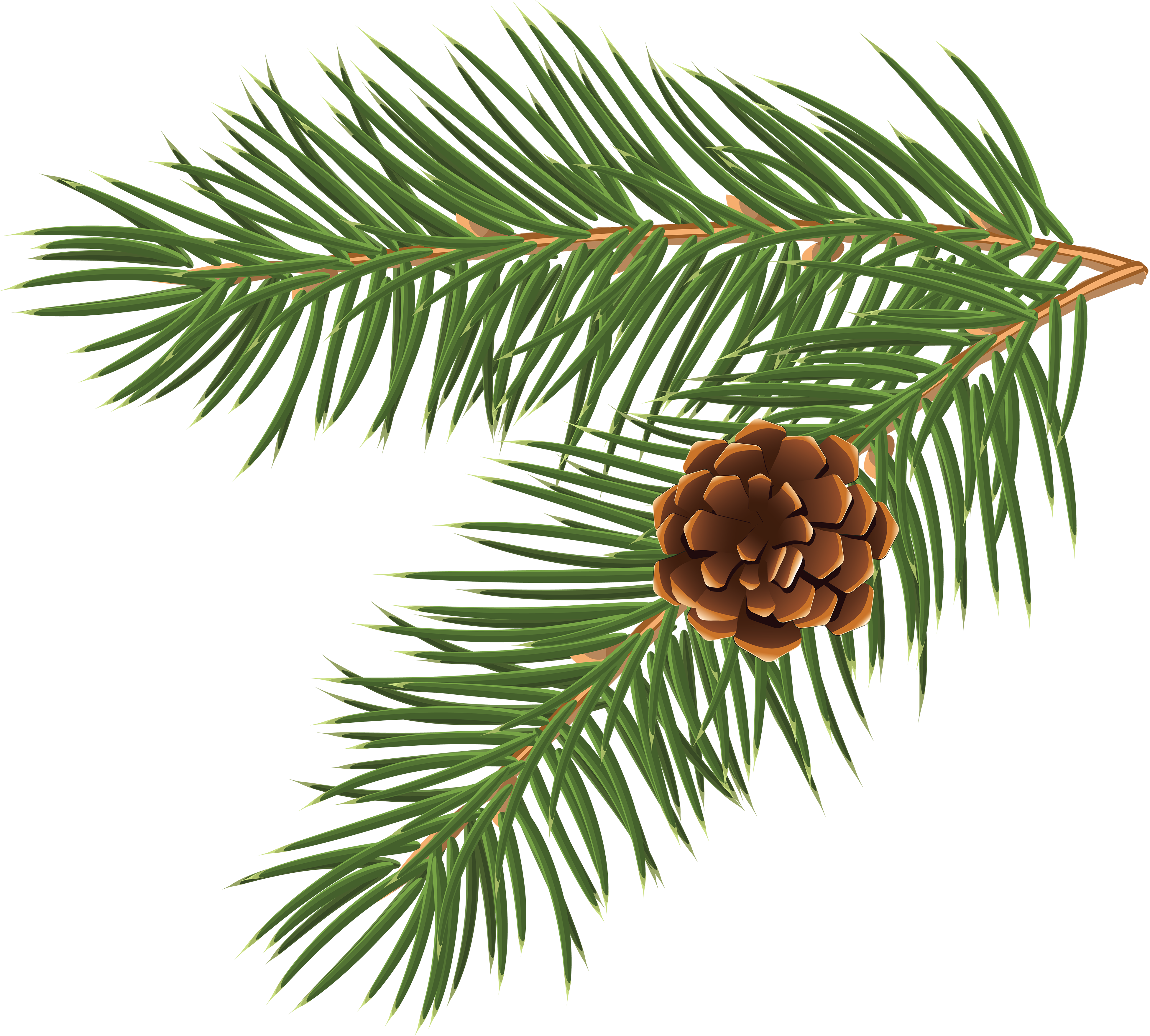 Loblolly pine tree branch clipart png free Pinus taeda Conifer cone Branch Tree Clip art - Pine cone material ... png free