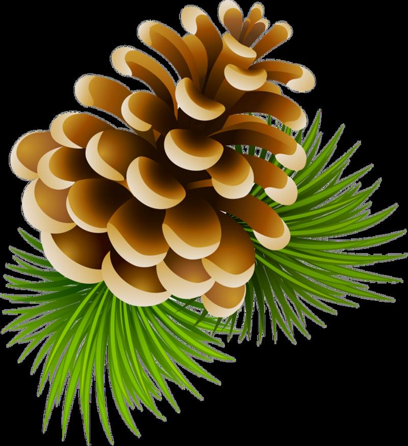 Christmas pinecone clipart png transparent download 0_13a5a1_e1865154_XL.png | YANDEX CLIP ART CHRISTMAS | Pinterest ... png transparent download