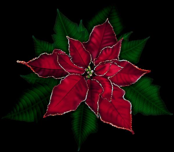Clipart poinsettia flower banner transparent download 18cute Poinsettia Clip Art - Clip arts & coloring pages banner transparent download