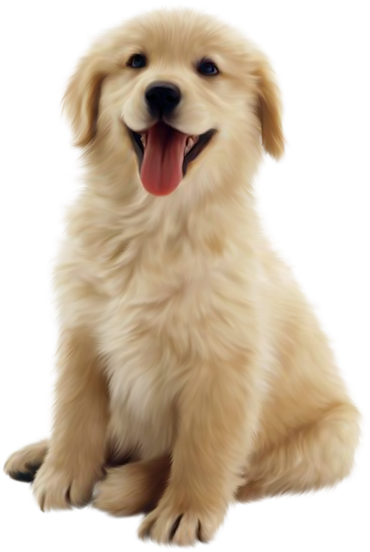 Christmas puppies clipart royalty free download Puppies Galore & More Jacksonville, Florida - Meet Your New Best Friend royalty free download