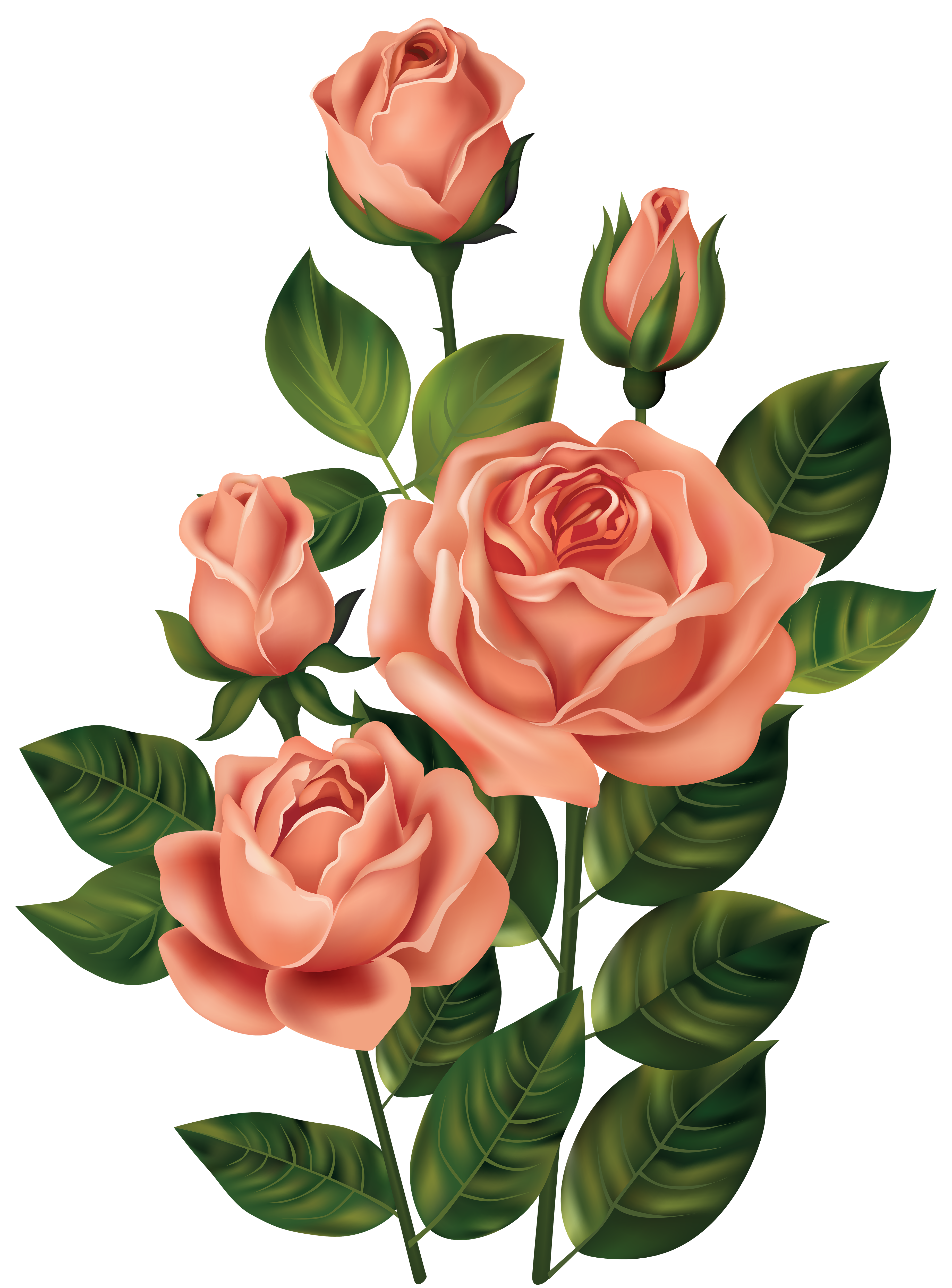 Roses_PNG_Clipart_Image-455354616.png (3696×5000) | розы | Pinterest ... banner freeuse library