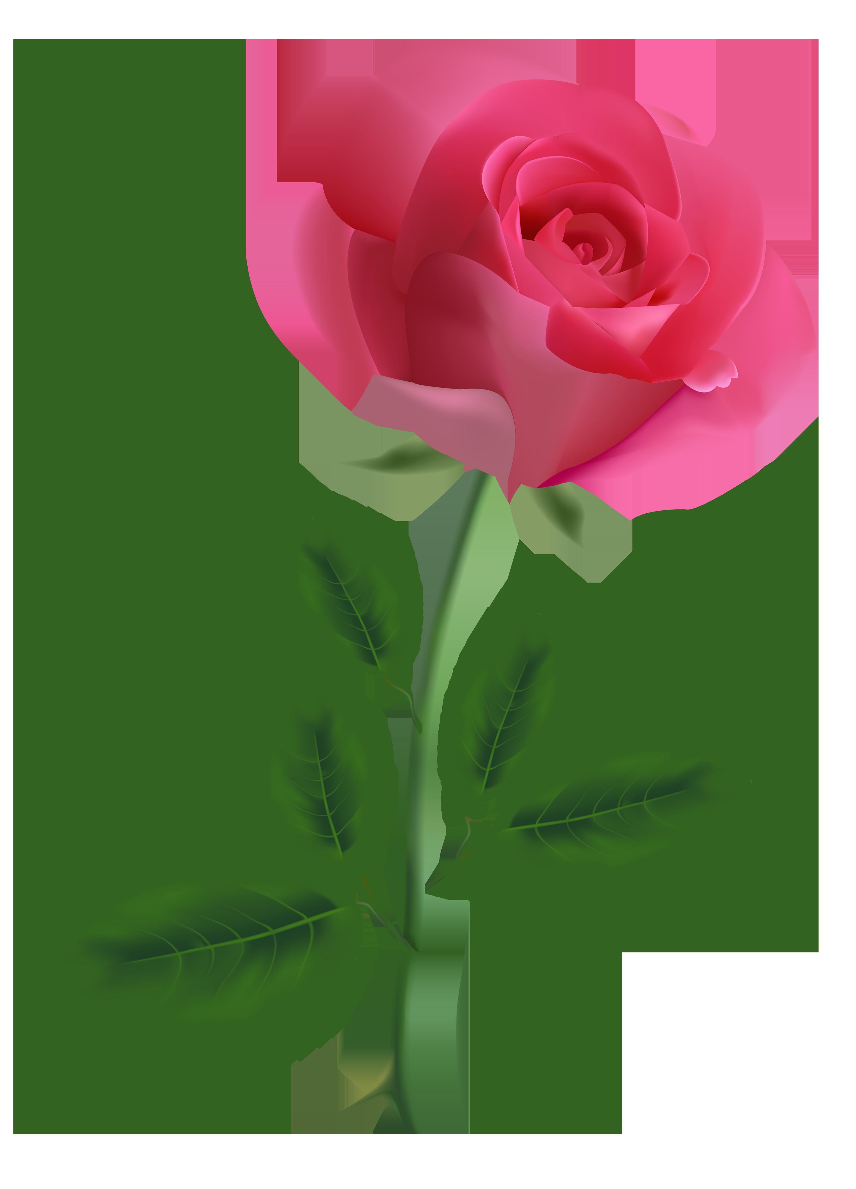 Christmas rose clipart picture transparent Pink Rose Clipart PNG Image - Best WEB Clipart picture transparent
