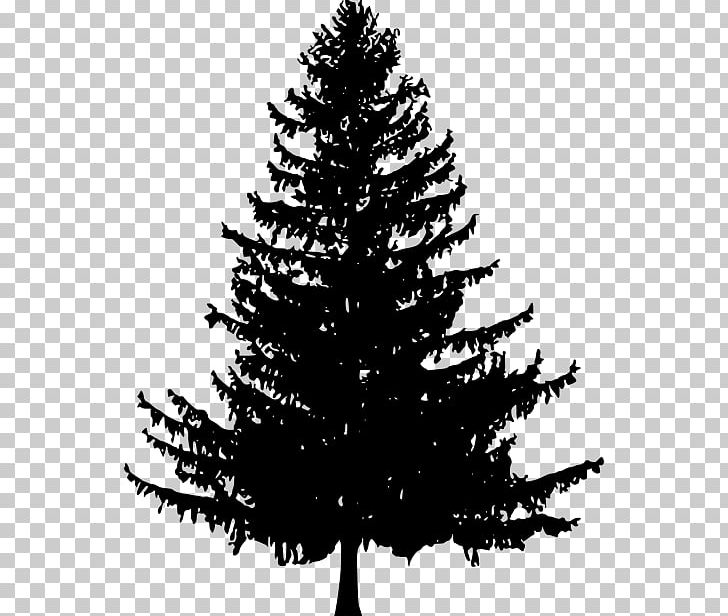 Christmas tree branch clipart black and white image transparent library Tree Fir Drawing Scots Pine PNG, Clipart, Black And White, Branch ... image transparent library