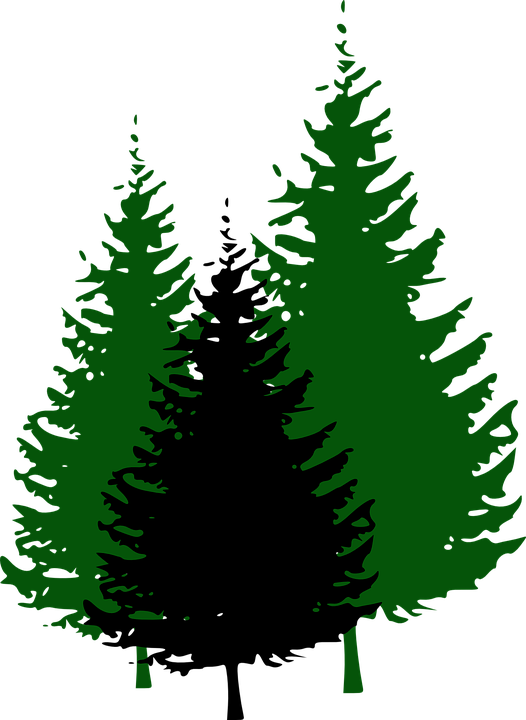 Spruce tree clipart image library download Redwood Tree Clipart at GetDrawings.com | Free for personal use ... image library download
