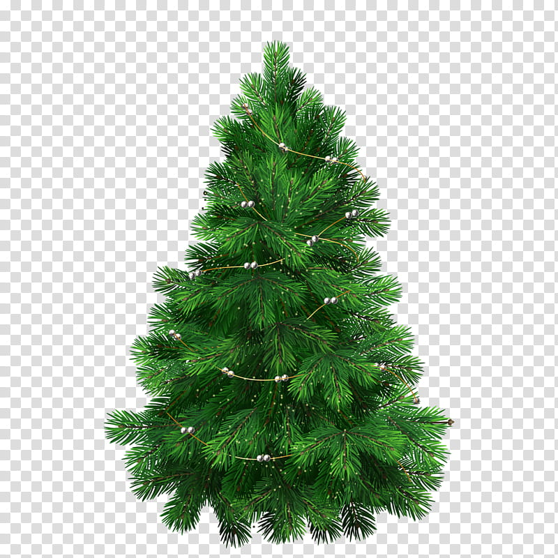 Christmas tree top view clipart clipart royalty free library Christmas Resource , green christmas tree transparent background PNG ... clipart royalty free library