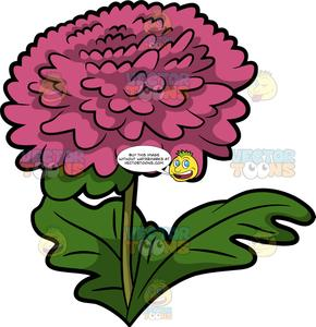 Chrysanthemum clipart jpg transparent A Pink Chrysanthemum Flower jpg transparent
