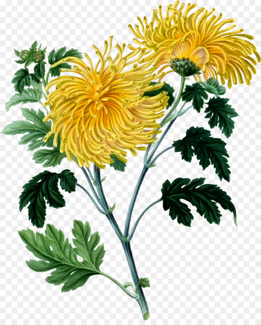 Chrysanthemum clipart png library download Flowers Clipart Background clipart - Drawing, Flower, Yellow ... png library download