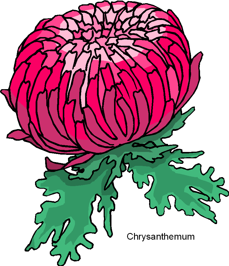 Chrysanthemum clipart vector transparent library crysanthemum drawing images | chrysanthemum flower free clipart ... vector transparent library