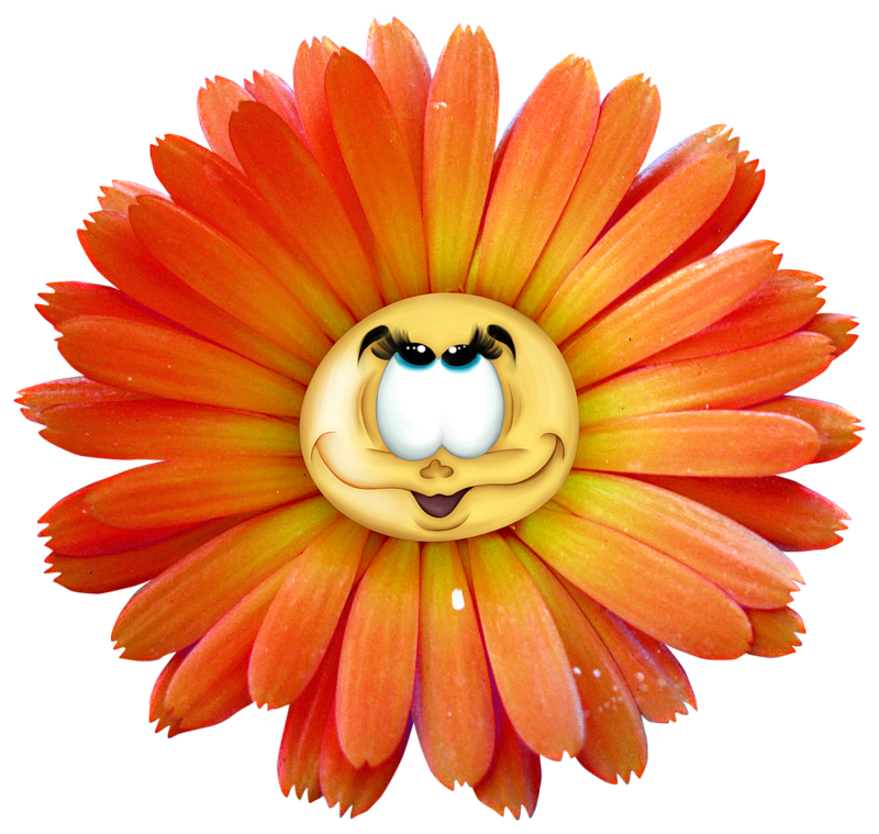 Peach color flower clipart svg royalty free Yellow Flower Clip art - Cute cartoon chrysanthemum 800*759 ... svg royalty free