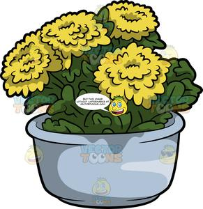 Chrysanthemums in pot clipart picture freeuse library A Chrysanthemum Plant With Flowers picture freeuse library