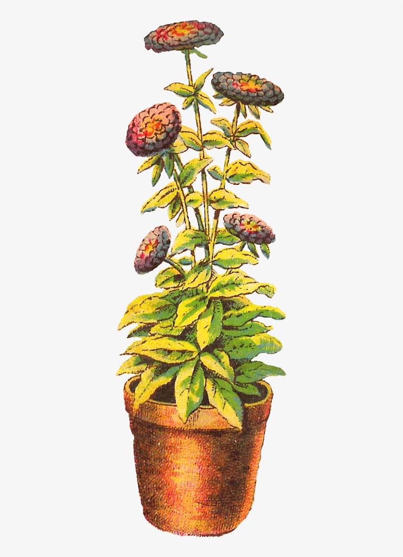 Chrysanthemums in pot clipart vector transparent download Flower Chrysanthemum Download Clip Art - Flower Pot Drawing - Free ... vector transparent download