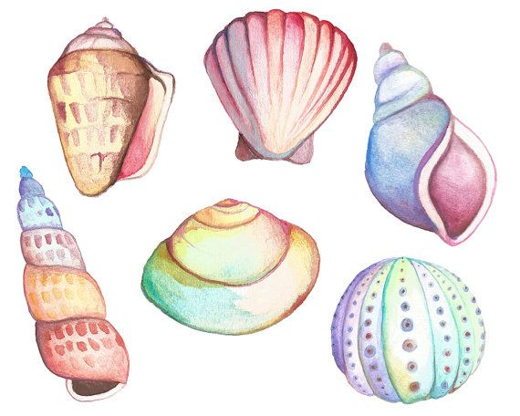 Clam watercolor clipart vector transparent Watercolor Sea Life Clipart Watercolor Clipart Hand Painted ... vector transparent