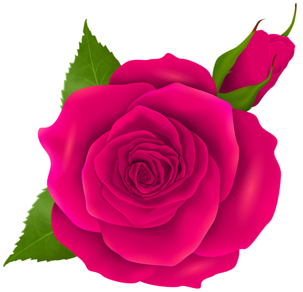 Classy flower clipart clip library library Pink Rose and Bud Transparent PNG Clip Art | Flowers | Pinterest ... clip library library
