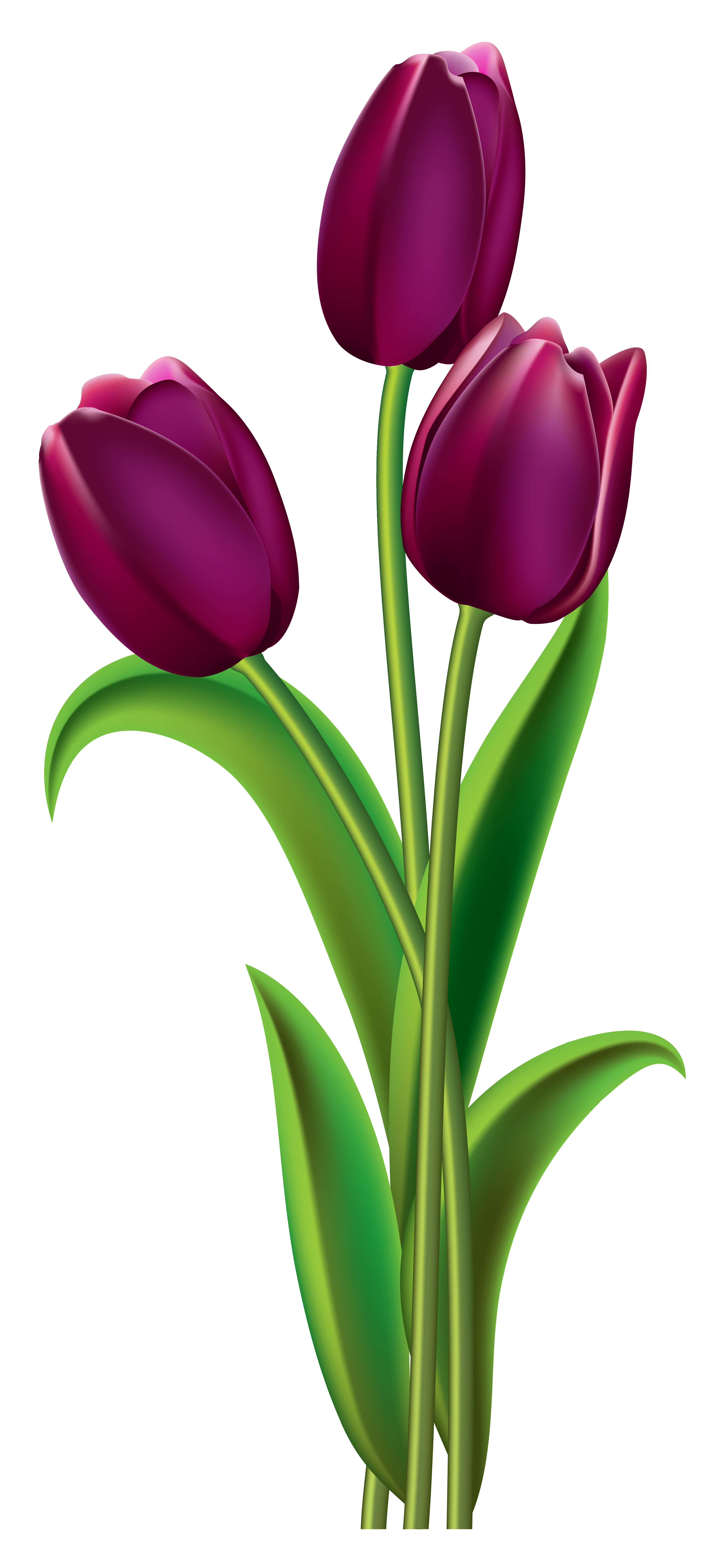 Clear background flower clipart clip royalty free library Tulips Transparent PNG Clipart Picture | Gallery Yopriceville ... clip royalty free library