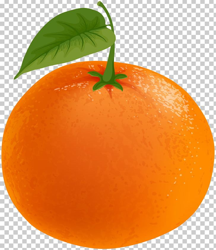 Clementine clipart vector royalty free library Clementine Tangerine Tangelo Grapefruit Orange PNG, Clipart, Citrus ... vector royalty free library