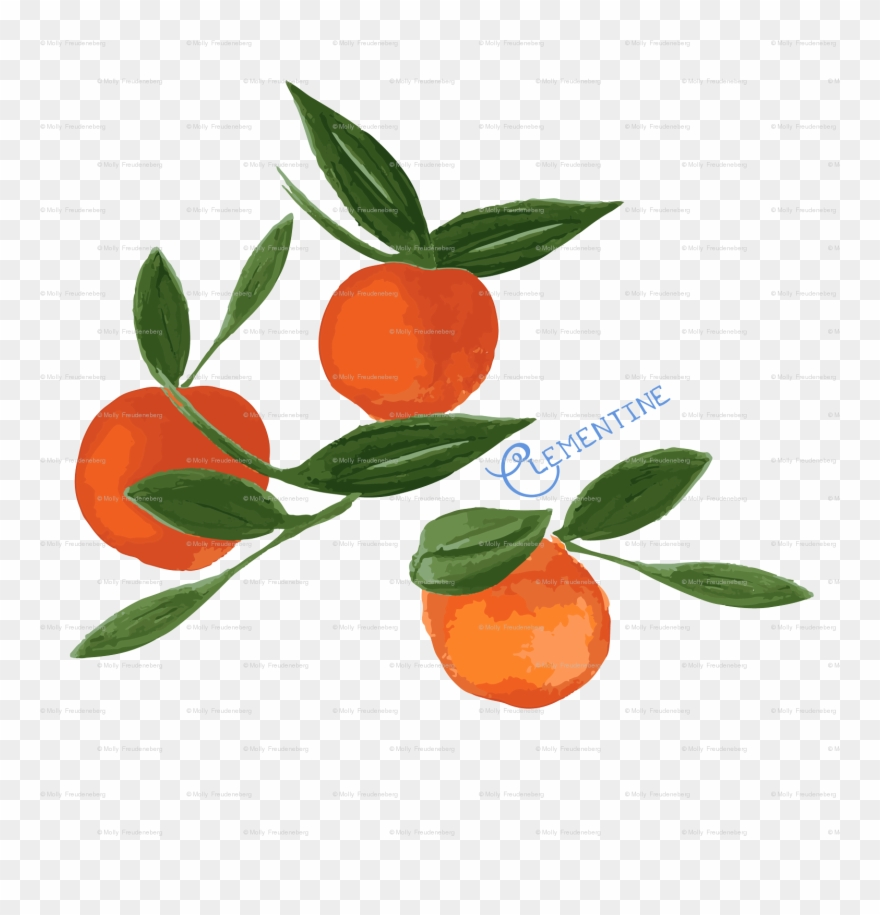 Clementines clipart clip art black and white download Clementine Clipart (#3320963) - PinClipart clip art black and white download