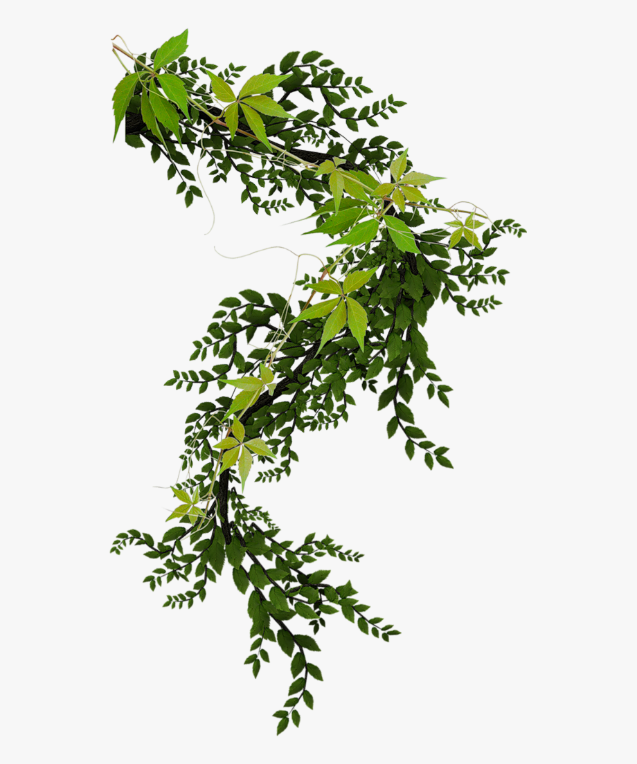 Climbing plant clipart clip free Pin By - Climbing Plant Png #2254364 - Free Cliparts on ClipartWiki clip free
