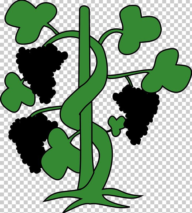 Climbing plant clipart banner royalty free Common Grape Vine Plant PNG, Clipart, Area, Artwork, Black And White ... banner royalty free